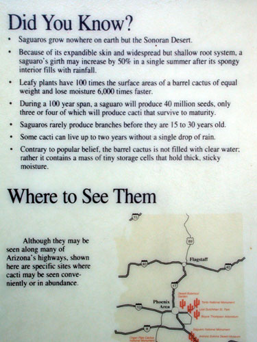 Interesting Cacti Facts At Burnt Well Rest Area And Wind
