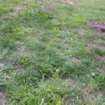 Fiona took this picture of the ground at the rest area