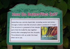 How Do Butterflies Eat?