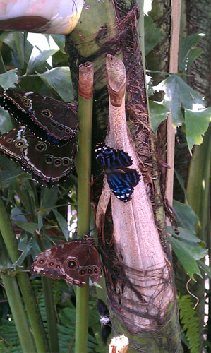 Secret Garden: Our Visit To The Butterfly Pavilion In Colorado